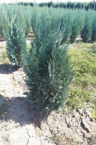 Plante Verzi 11