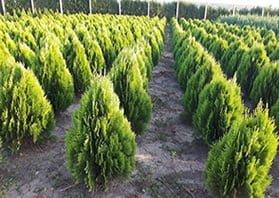 Plante Verzi 2